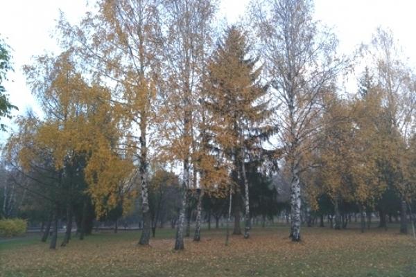Sinoptik: Погода в Рівному та Рівненській області на вихідні, 3 і 4 листопада