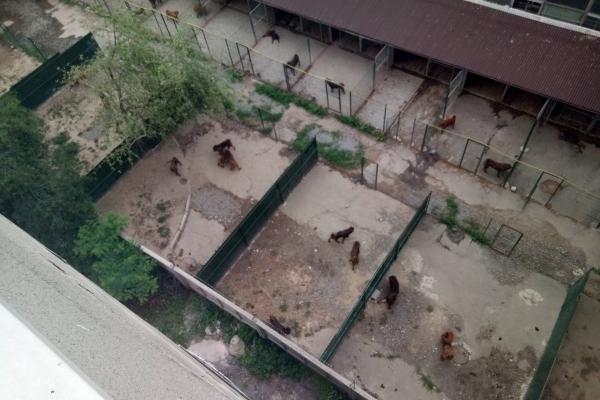 За виселення собак Бойка з території Радіозаводу заплатили аванс