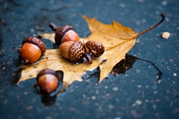 Sinoptik: Погода в Рівному та Рівненській області на середу, 14 листопада