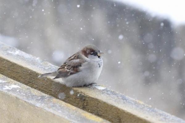 Погода на Рівненщині у вихідні 17-18 листопада