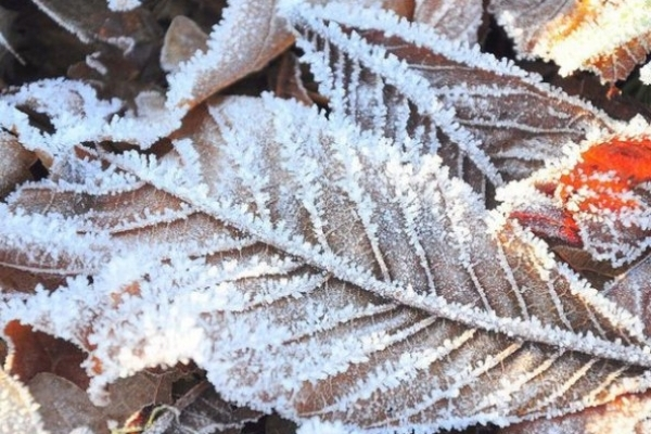 Sinoptik: Погода в Рівному та Рівненській області на вівторок, 20 листопада