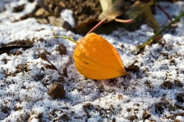 Sinoptik: Погода в Рівному та Рівненській області на четвер, 29 листопада
