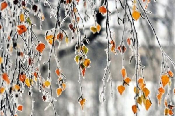Погода на Рівненщині в понеділок, 3 грудня