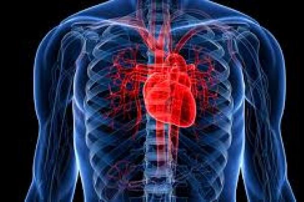 На Рівненщині пройде конференція щодо лікування пацієнтів із серцево-судинними захворюваннями