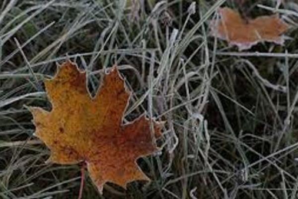 Погода на Рівненщині в четвер, 6 грудня