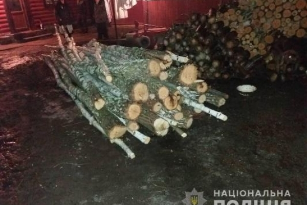 На Березнівщині  у заповіднику рубають дерева