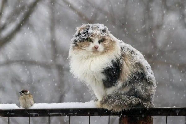 Sinoptik: Погода в Рівному та Рівненській області на середу, 12 грудня