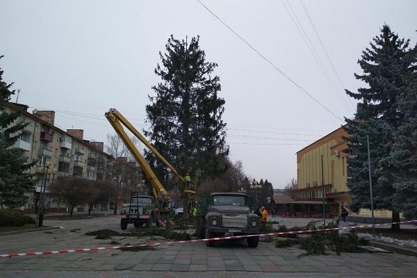 Рівненська ялинка не потрапила у трійку найвищих в Україні