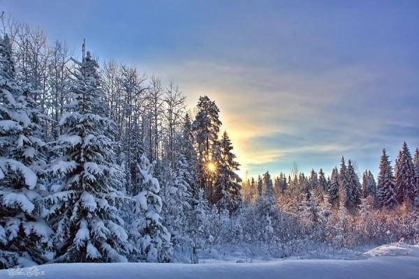 Sinoptik: Погода в Рівному та Рівненській області на середу, 19 грудня