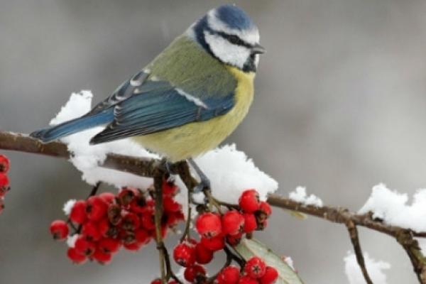 Sinoptik: Погода в Рівному та Рівненській області на четвер, 20 грудня