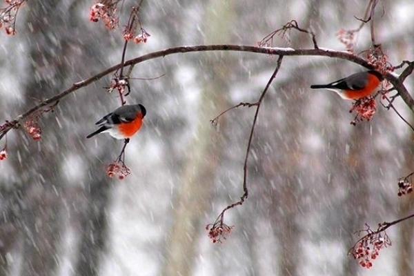 Sinoptik: Погода в Рівному та Рівненській області на п'ятницю, 28 грудня