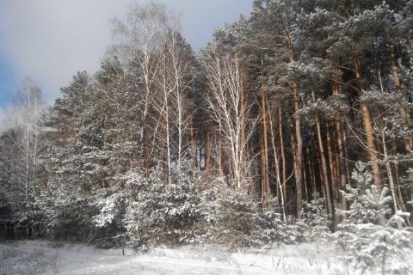 Sinoptik: Погода в Рівному та Рівненській області на п'ятницю, 11 січня