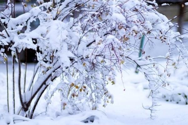 Sinoptik: Погода в Рівному та Рівненській області на середу, 16 січня
