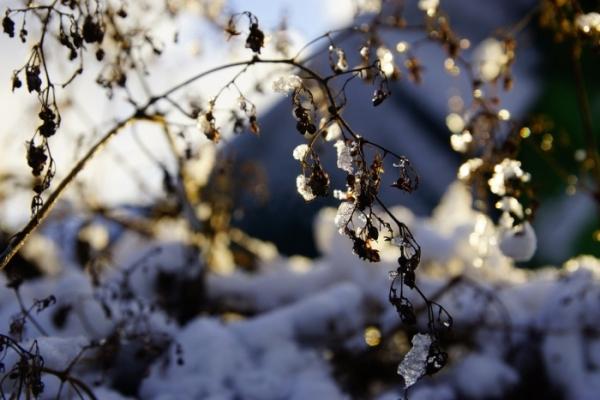 Sinoptik: Погода в Рівному та Рівненській області на п'ятницю, 18 січня