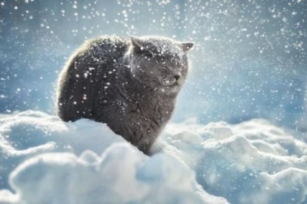 Sinoptik: Погода в Рівному та Рівненській області на вівторок, 29 січня