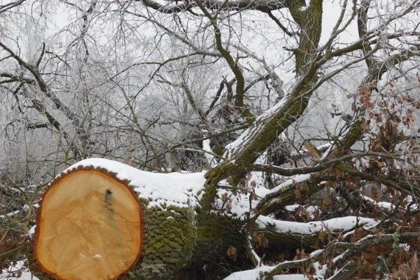 Невідомі зловмисники викрали дерева з кладовища на Рівненщині (Фото)