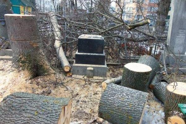 У Рівному на цвинтарі Грабник – лісоповал!