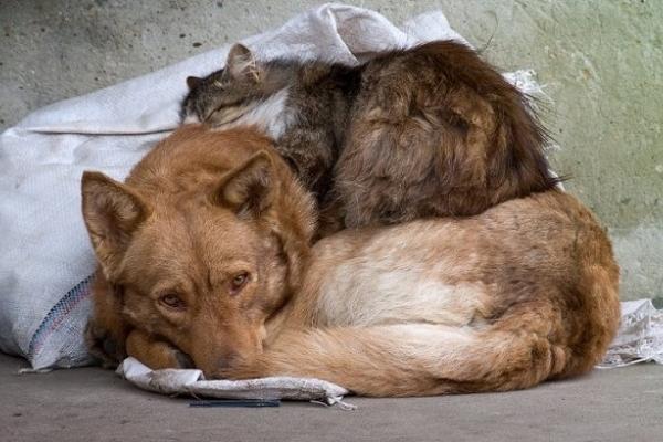У Рівному триває акція «Діти за гуманне ставлення до безпритульних тварин»