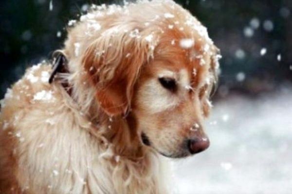 Sinoptik: Погода в Рівному та Рівненській області на вівторок, 12 лютого