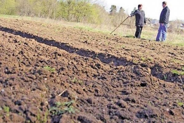 Торік агрофірми Рівненщини до місцевих бюджетів сплатили майже 452 мільйони гривень