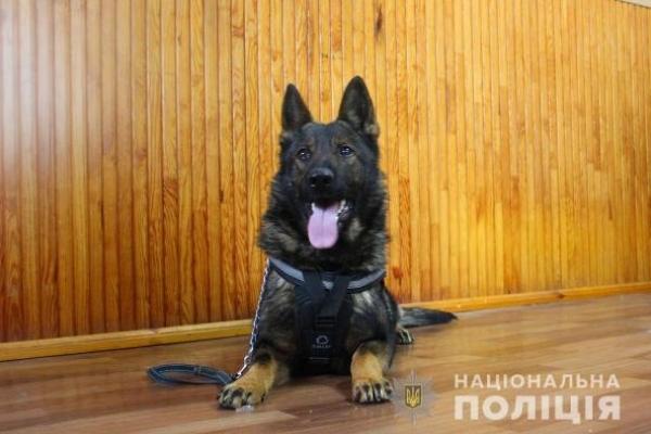 На Млинівщині затримати крадія допомогла службова вівчарка