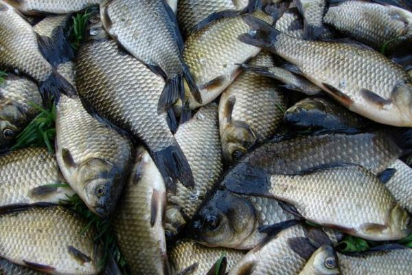П'ять порушень правил рибальства зафіксували рівненські рибпатрульні протягом тижня