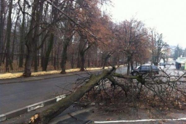В Острозі уночі на дорогу впало дерево
