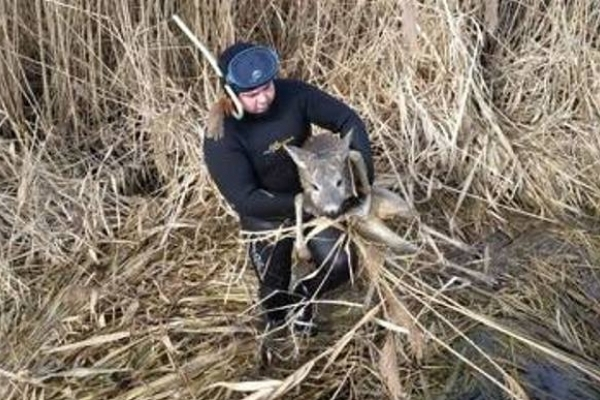 На Рівненщині бійці ДСНС врятували молоду козулю