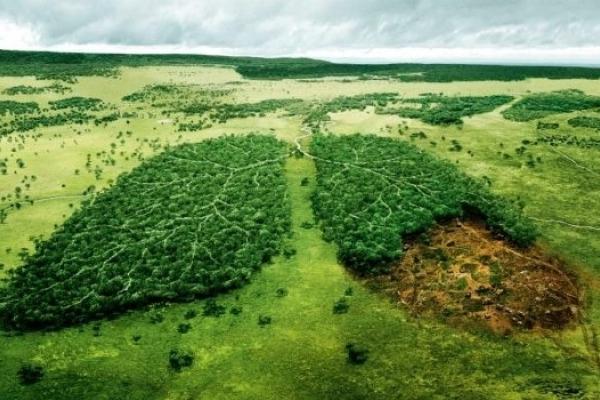 Майже 14 млн. грн. з бюджету області - на природоохоронні заходи