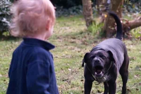 У Рівному жінка з перехожим ледь відбили дитину від бійцівського пса