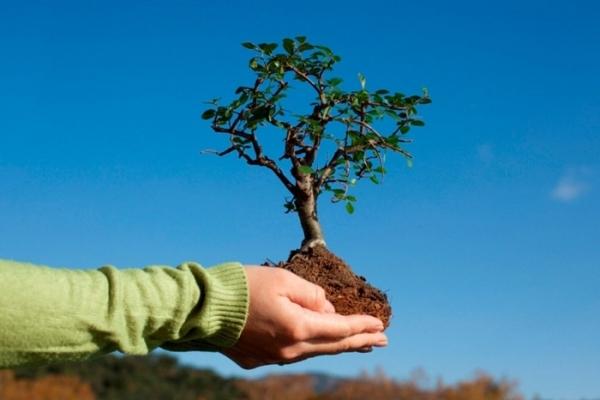 У Рівному відбудеться екологічний фестиваль «EcoFestPlaza»