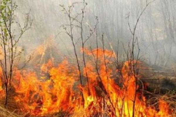 На Рівненщині розпочали слідство щодо пожежі у заповіднику