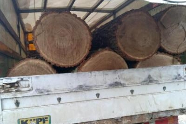 У Зарічненському районі поліцейські розслідують законність перевезення деревини