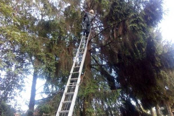 У Рівному рятувальники знімали зі шпаківні на території дитсадка рій бджіл