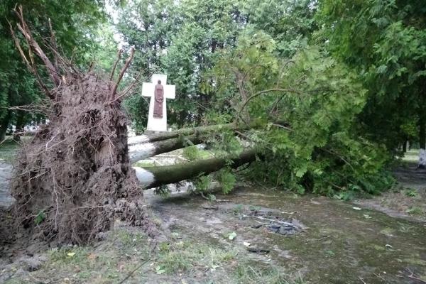 Зірвані дахи та потрощені дерева: буревій наробив лиха на Рівненщині (Фото)