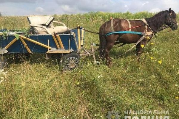 Курйозна крадіжка на Рівненщині: аби забрати крадене, зловмисник запріг коня
