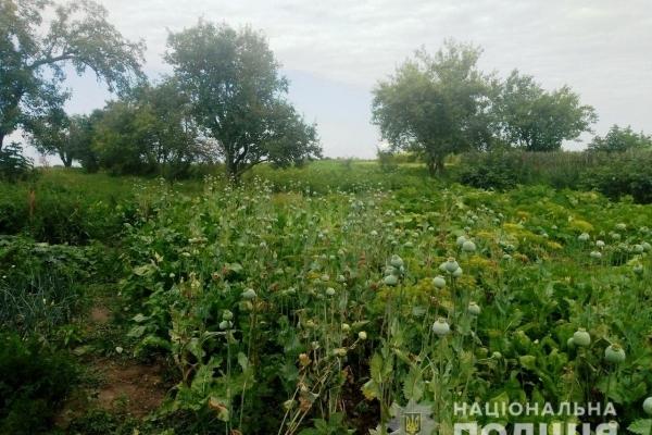 Поліцейські вилучили понад 10 тисяч рослин маку та конопель на Рівненщині