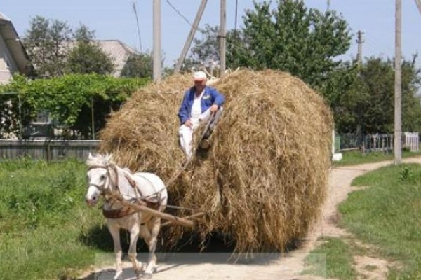 Винні коні й кобили? - повчальна історія селянина з Млинівщини
