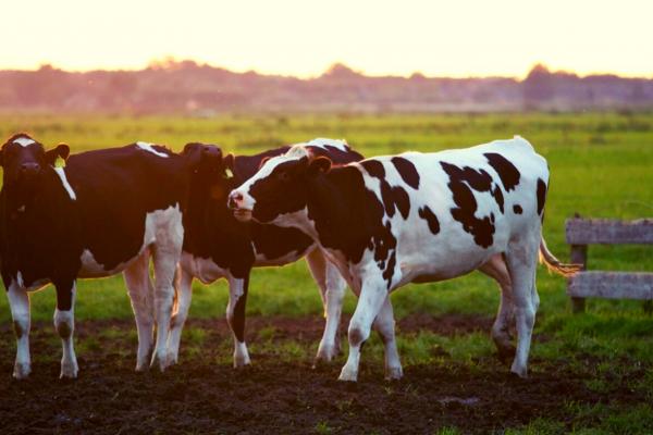 На Рівненщині пишуть сценарій серіалу про те, як круто бути фермером