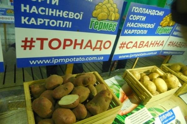 Яловичі – картопляна столиця Рівненщини