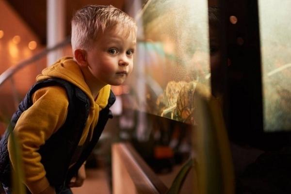 Вища школа Media&Production запускає новий формат «INSTA-бранчі для дітей»