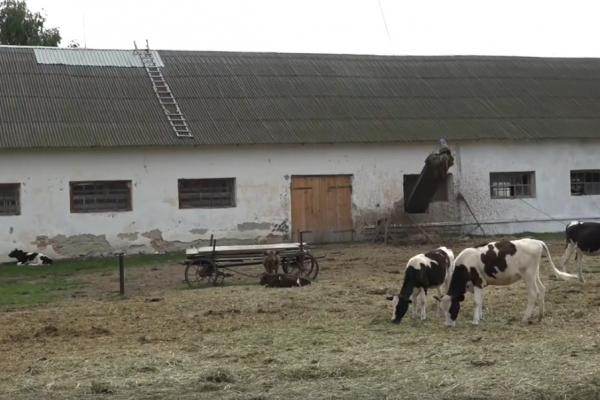 На Рівненщині триває робота над написанням сценарію міні-серіалу «Фермери» (Відео)