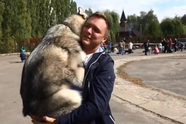 У Рівному відбувся племінний огляд собак (Відео)
