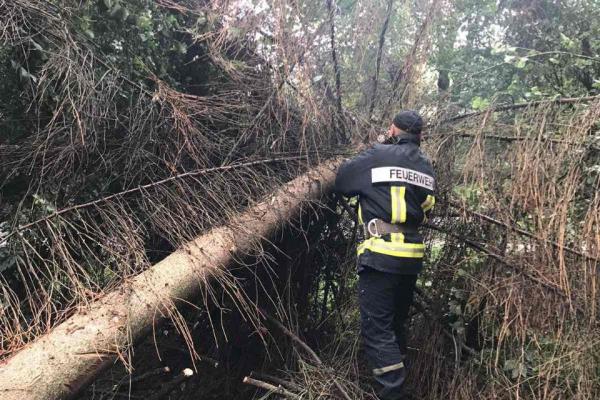 Рівненські рятувальники зрізали аварійне дерево