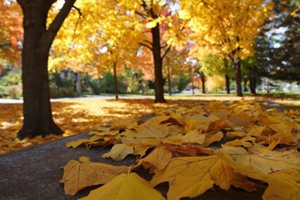 Спалювання листя викликає захворювання на рак