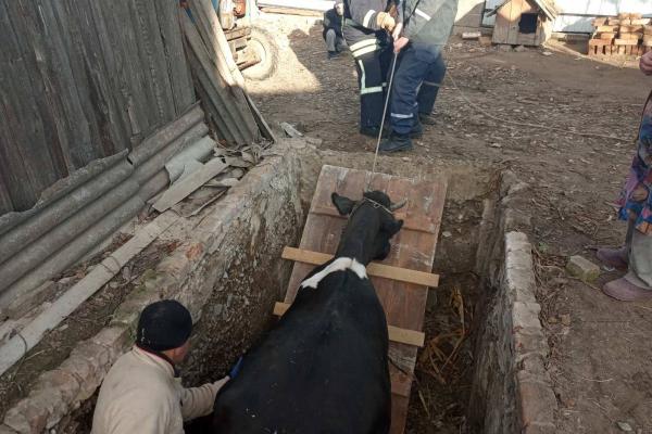 На Млинівщині врятували корову