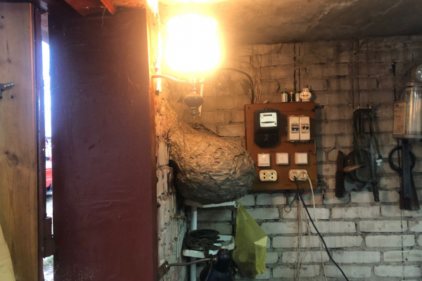 У Вараші рятувальники знешкодили осине гніздо