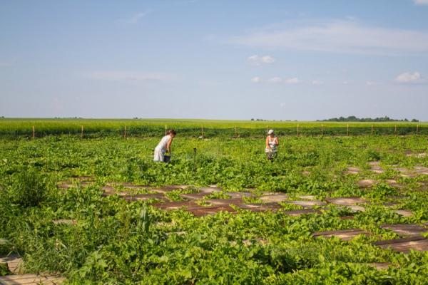 На Рівненщині ІТ-фахівці вирощують равликів