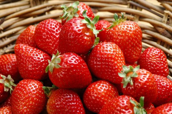 Польське підприємство вирощуватиме полуницю на Рівненщині