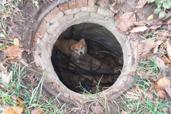 В Дубно рятувальники дістали собаку з колодязя